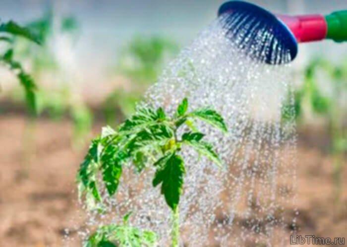 Значение воды для фотосинтеза