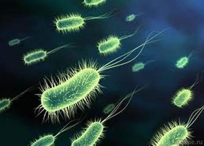 Хемотрофные бактерии