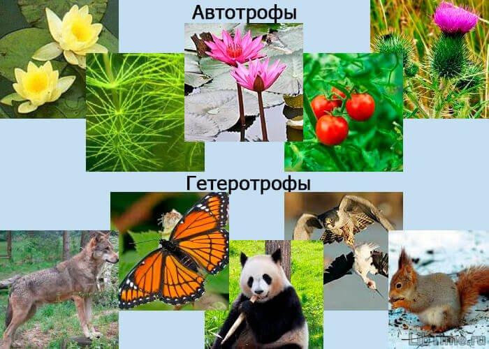 Автотрофные и гетеротрофные организмы