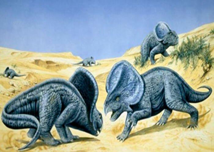 Динозавр протоцератопс