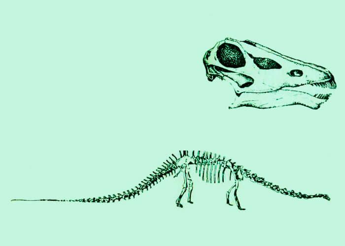 Скелет древнего диплодока