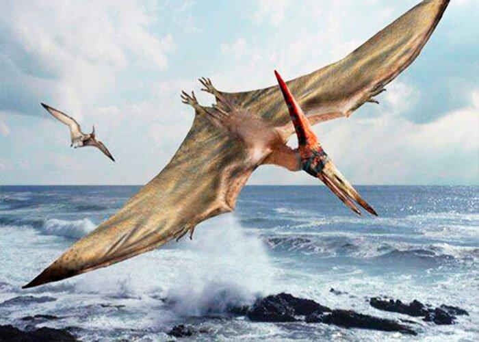 Крылатый ящер - птерозавр