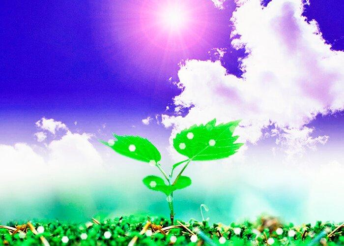 Ферменты растений