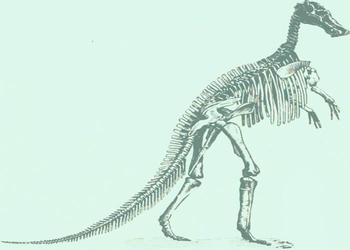 Скелет гигантского манджурозавра