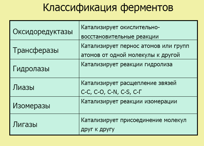 Классификация ферментов