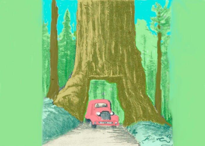 Мамонтовое дерево (секвойя) в Калифорнии