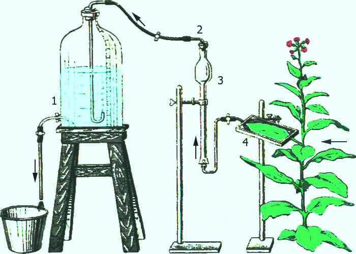 Методы определения интенсивности фотосинтеза