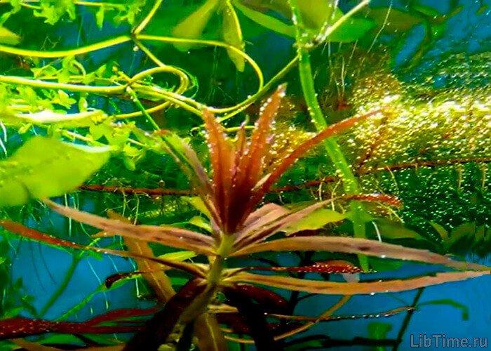 Вклад Тимирязева в изучение фотосинтеза