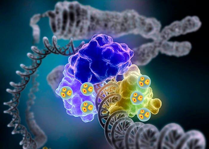 Разные ферменты в клетках растений