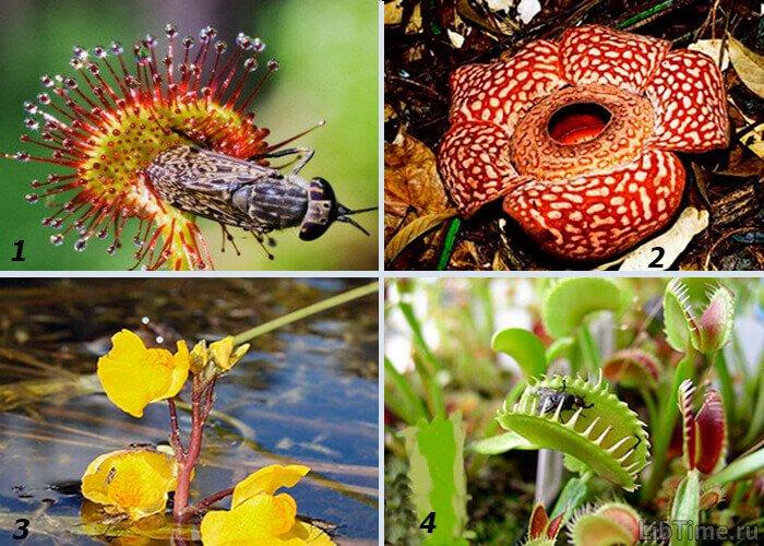Растения гетеротрофы