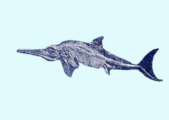 Морской хищник - рыбоящер ихтиозавр