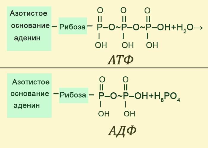 Химизм и энергетика фотосинтеза