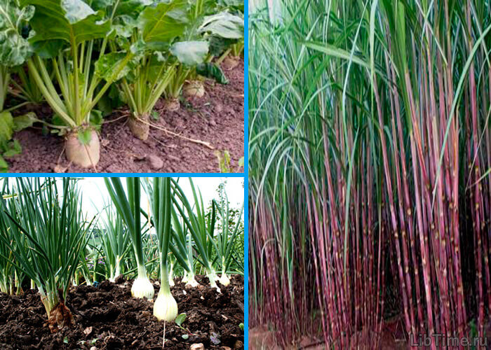 Накопление органического вещества в растениях