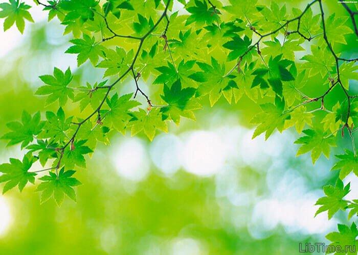 Накопление органического вещества в процессе фотосинтеза