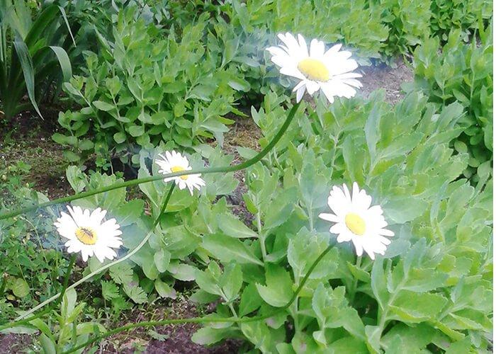 Дыхательный коэффициент растений