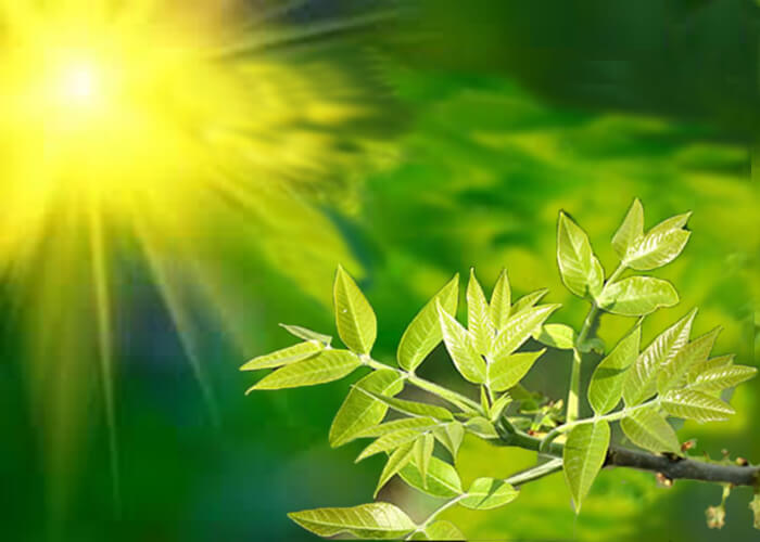 Процесс дыхания растений
