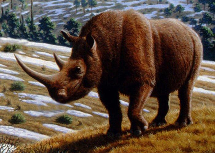 Древний носорог