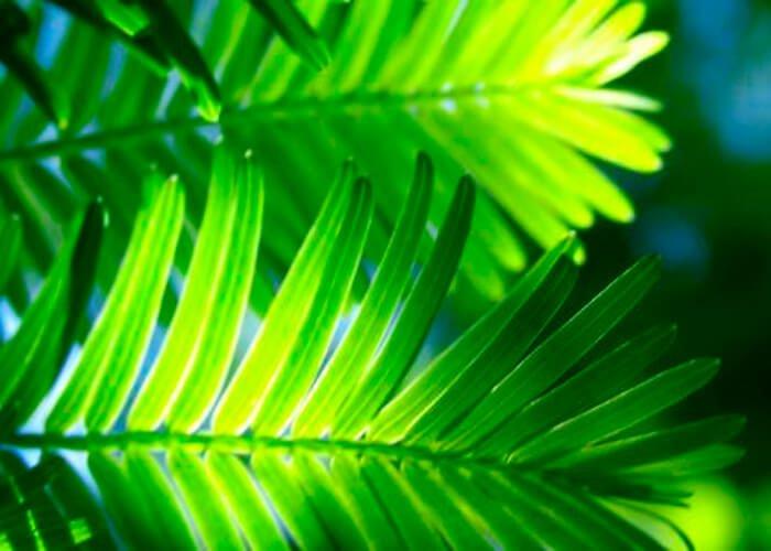 Свет и растение