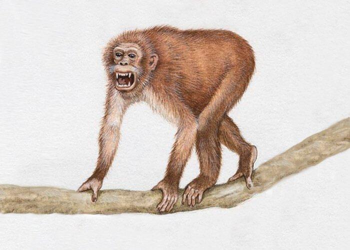 Развитие предков человека