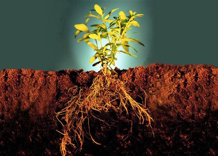 Функции корня растений