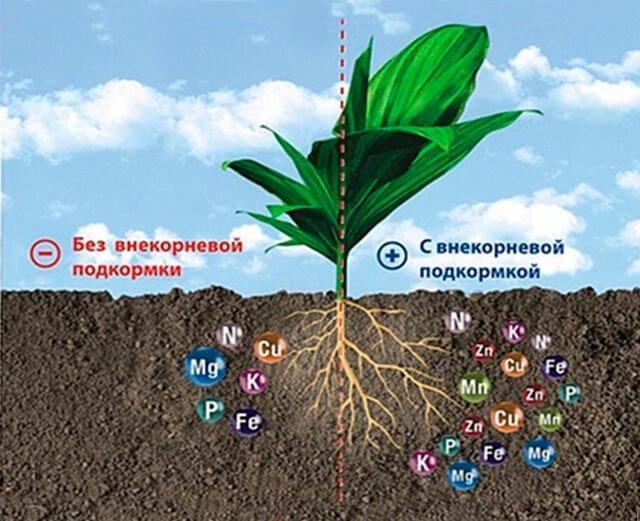 Микроэлементы необходимы растениям