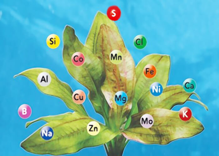 Роль микроэлементов в жизни растений