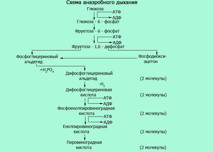 Схема анаэробного дыхания