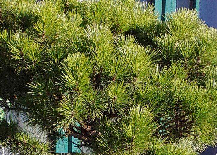 Азот в растениях