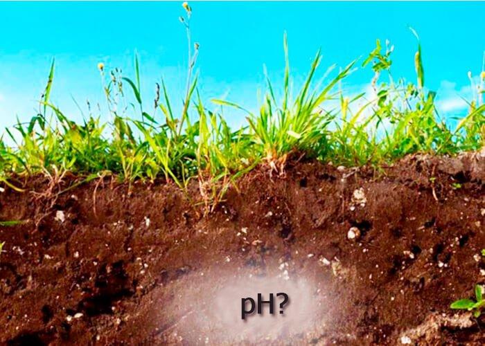 Что такое реакция среды pH