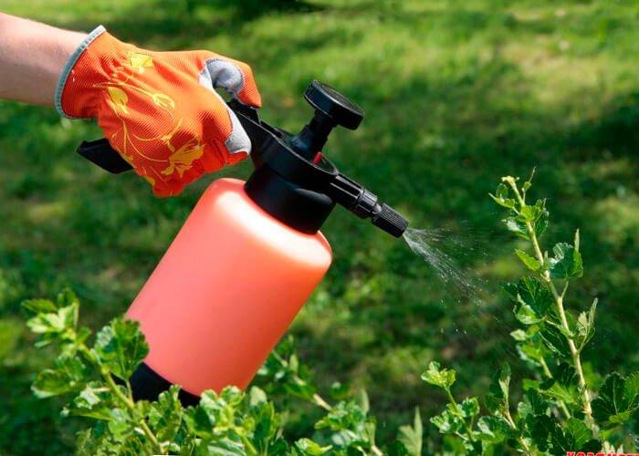 Подкормка растений корневая и внекорневая