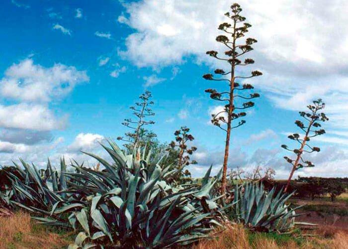Онтогенез растений