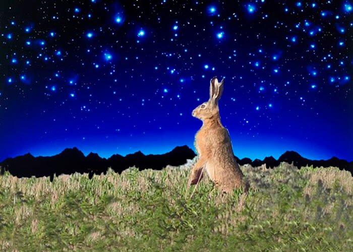 Заяц прислушивается