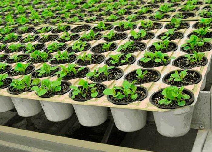 Вегетационный метод
